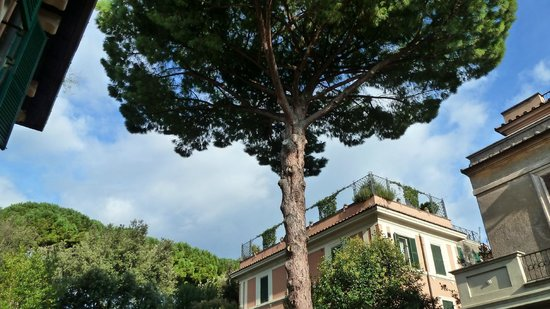 Hotel Aventino: Under the great pinetree