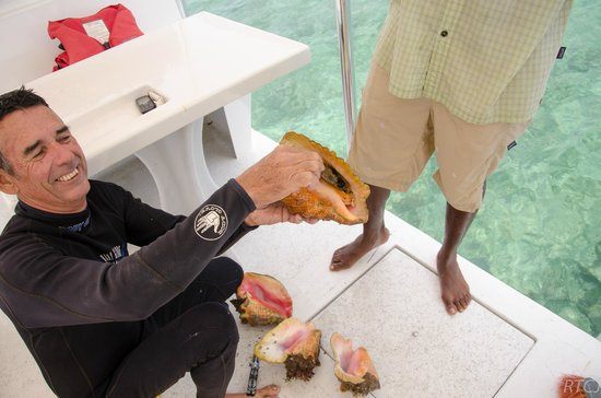 Belcampo Lodge: Snorkeling with a Chef - Pulling out the conch