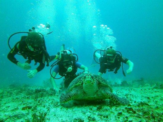 Yucatan Diving & Travel
