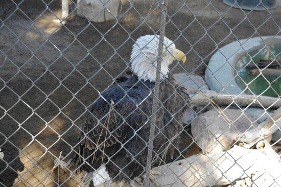 Big Bear Alpine Zoo at Moonridge : usa, usa