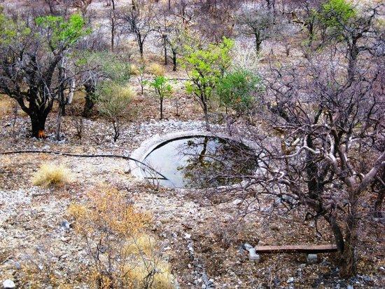 Etosha Safari Lodge: Blick von der Terrasse auf ein kleines Wasserloch