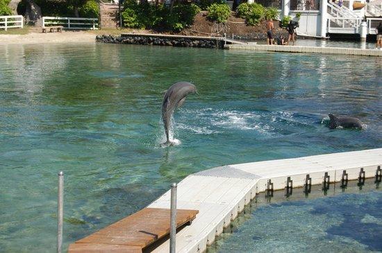 Hilton Waikoloa Village: Famous Dolphin pool