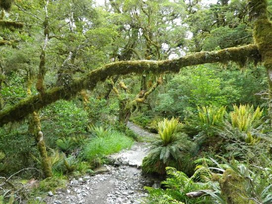 Milford Track : Mystical forest