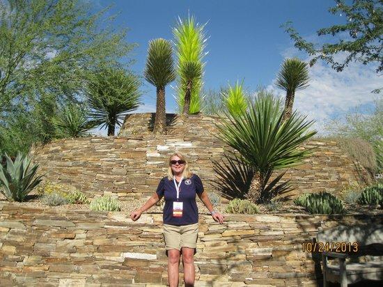 Agave Picture Of Desert Botanical Garden Phoenix Tripadvisor