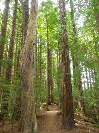 Te Urewera Treks: Forest trees