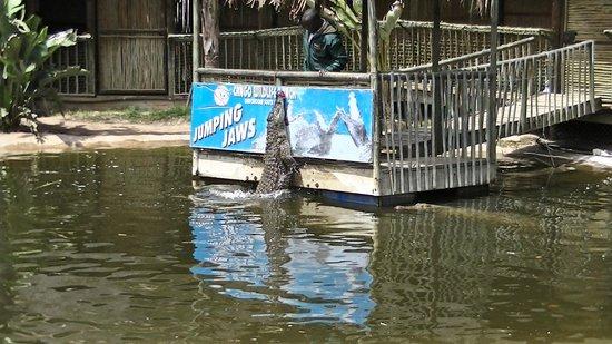 Cango Wildlife Ranch: krokodillen voeren