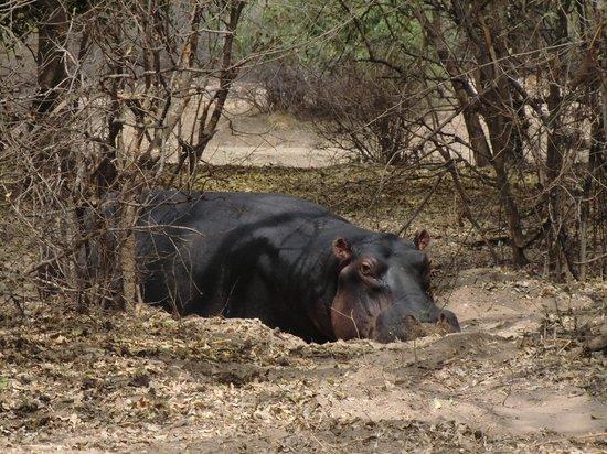 Track and Trail River Camp: opgepast, nijlpaarden en olifanten kun je tegenkomen op het terrein van T&T