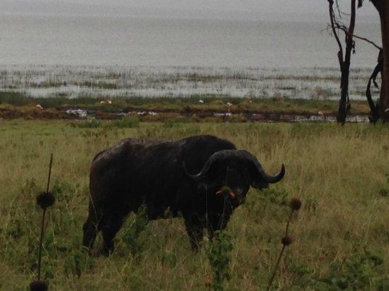 Big Time Safari Camp: LAKE NAKURU