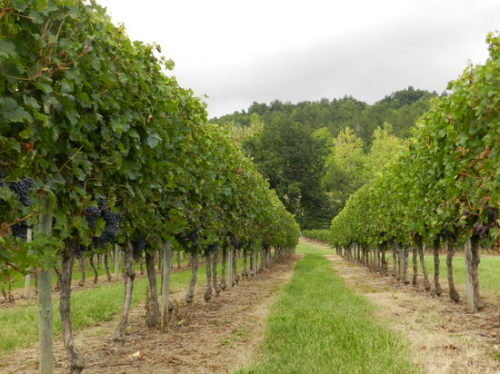 le Grand Chemin De La Vie : Our neighbours vines