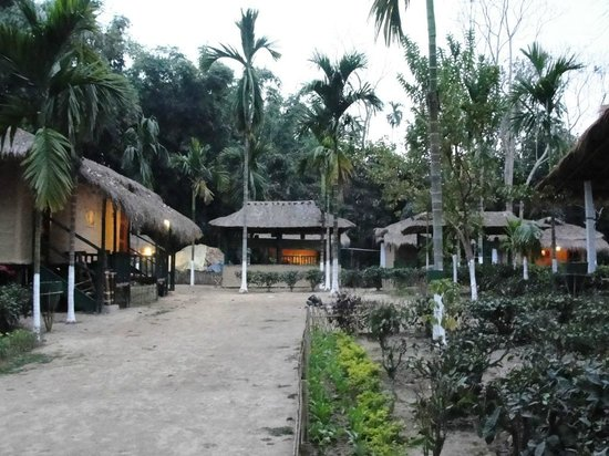 Nature Hunt Eco Camp, Kaziranga National Park: Early Morning view of the Resort