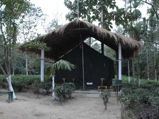 ‪‪Nature Hunt Eco Camp, Kaziranga National Park‬: Tent‬