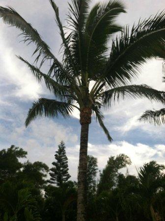 Maui Ocean Breezes: Wispering winds