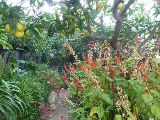 Villa Costanza Bellavista: Garden