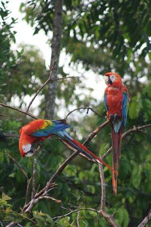 Amazon Tours Peru - Private Day Tour: couple d'aras