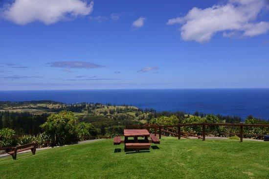 Mount Pitt picnic table