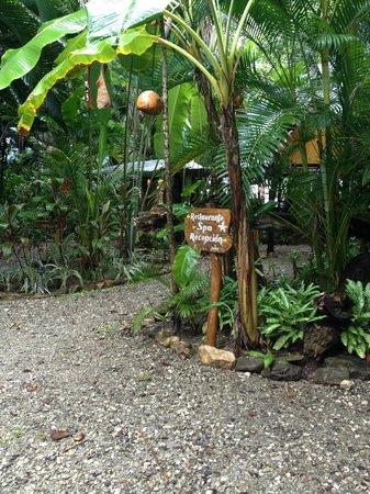 Hotel Tropico Latino : Greenery