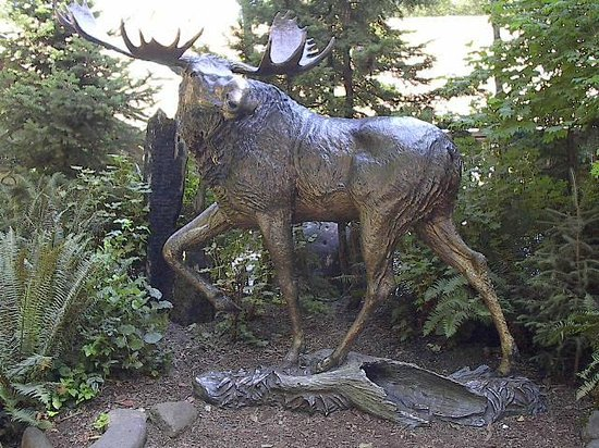 Northwest Trek Wildlife Park: Bronze Moose