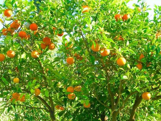 ecco perché Giardini Naxos si chiama così, perché era un giardino di aranci
