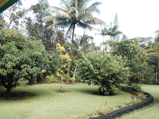 Hale Moana Bed & Breakfast: garden