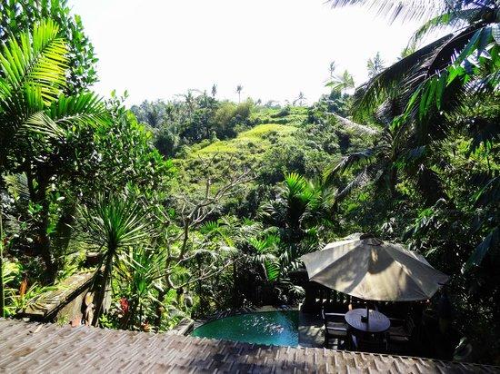Bidadari Private Villas & Retreat: View from Villa Pucuk