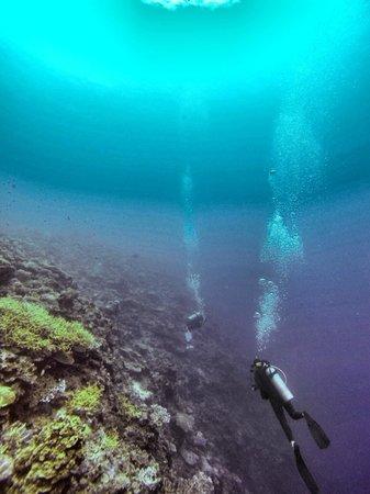 Nautilus Scuba : Reef
