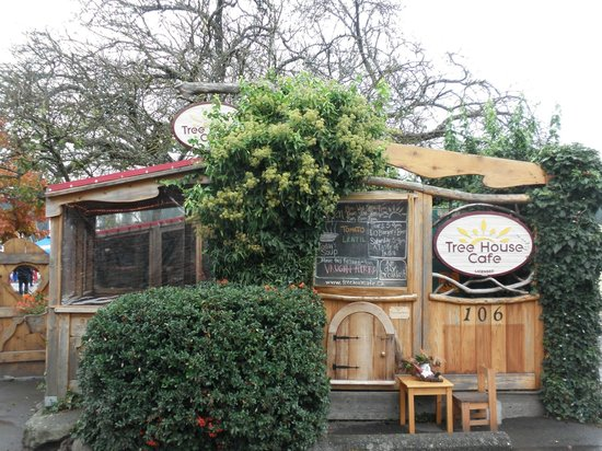Tree-House Cafe: A tree in the cafe!