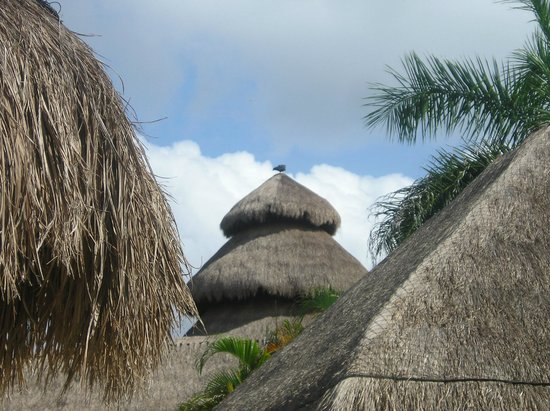 Iberostar Cozumel: Vultures on top of the hut