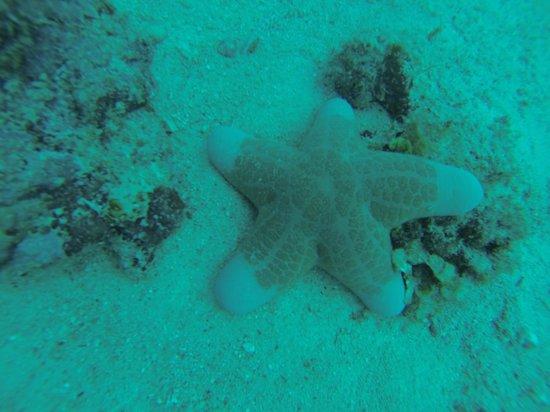 Seaventures Dive Rig: Star Fish