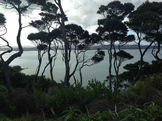 Kawau Lodge: On walk to Vivian Bay