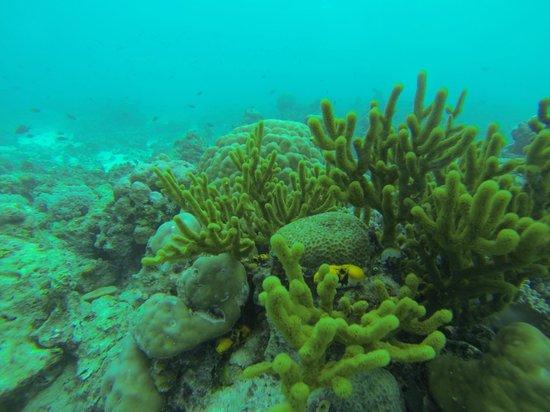 Seaventures Dive Rig: Sipadan