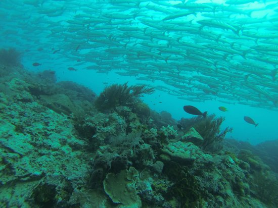Seaventures Dive Rig: Barracuda Point