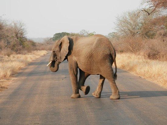 Royal Kruger Lodge: Kruger National Park