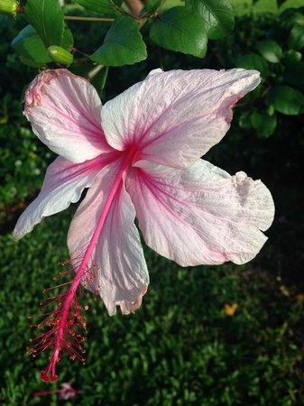 Secrets Wild Orchid Montego Bay: Beautiful flowers on the grounds