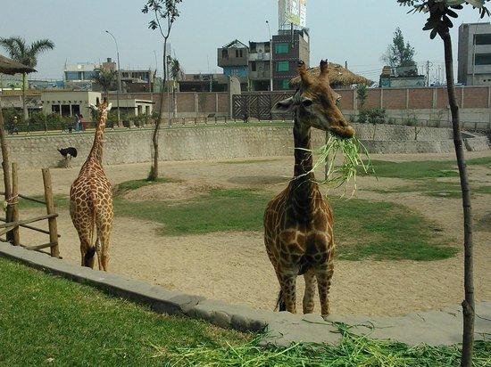 Parque Zoologico Huachipa
