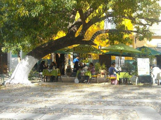 Cafe Bossa Nova: un excelente café de chiapas