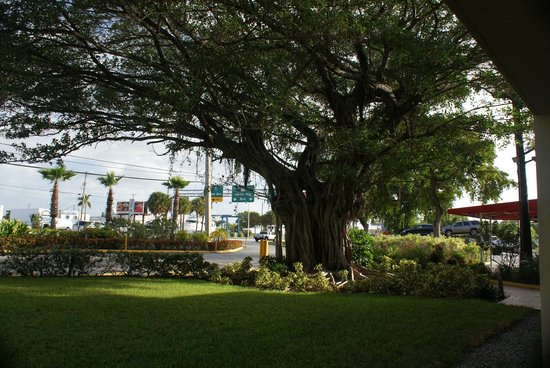 Red Carpet Inn Fort Lauderdale Airport: Loved the trees!