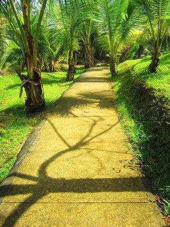 Popa Paradise Beach Resort: Gorgeous walking paths throughout island