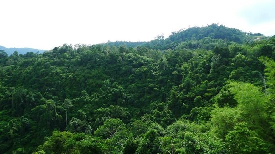 Treetop Tour Cable Ride : our view from the highest station