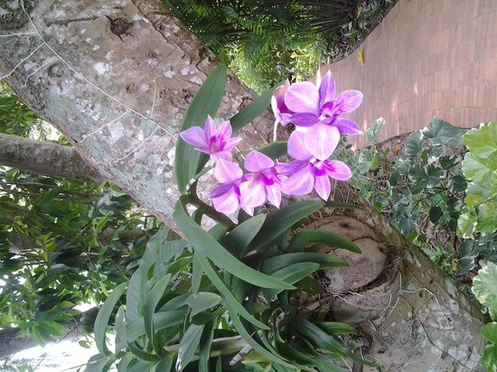Paradise Beach Resort: loads of orchids