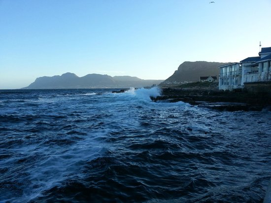 Live Bait in Harbour House: Mesmerizing sea