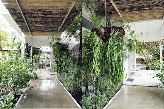 Glur Hostel : Walkway towards the rooms - the amount of greenery is very pleasant to the eyes