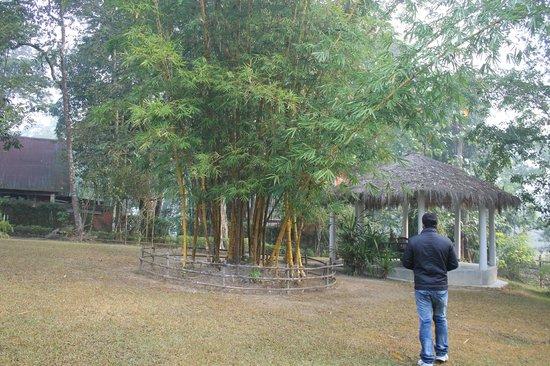 Bon Habi Resort: Resort campus