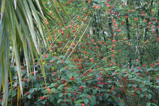 Bon Habi Resort : Humming birds