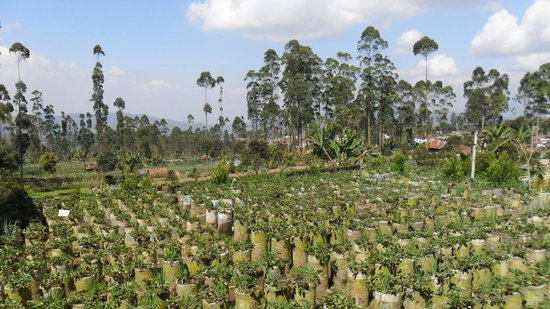 Zodiak @ Paskal: Strawberry plantations