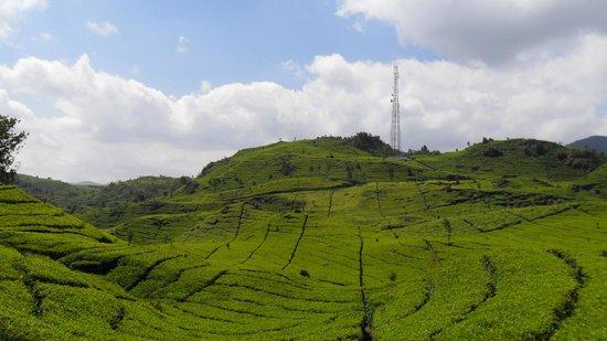 Zodiak @ Paskal: Fantastic tea plantations