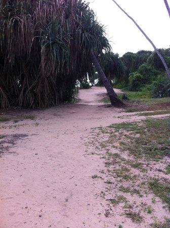 Paradise Road The Villa Bentota: The route to the beach.