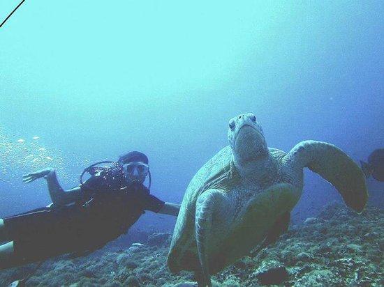 Diversia Diving: io ed una vanitosa tartaruga.