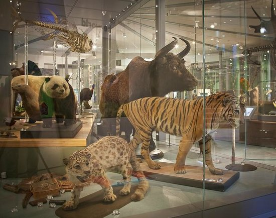 Leeds City Museum: Life on Earth Gallery