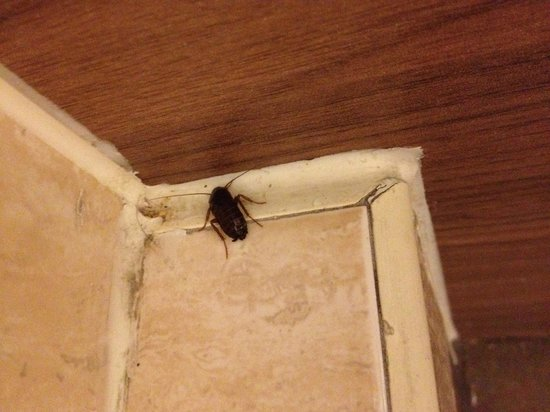 Light of India: Cockroach on the toilet