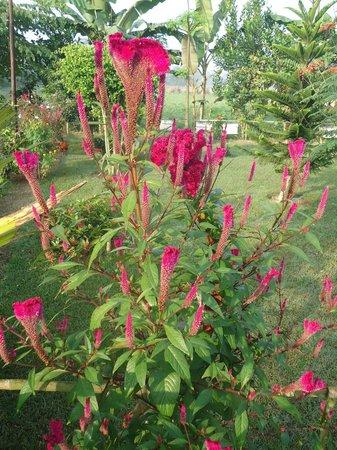 Hotel Monalisa Chitwan: hotel garden